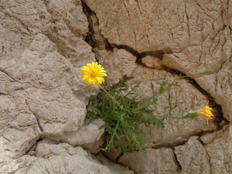 Kamen i cvet 32.%20cvijet%20iz%20kamena