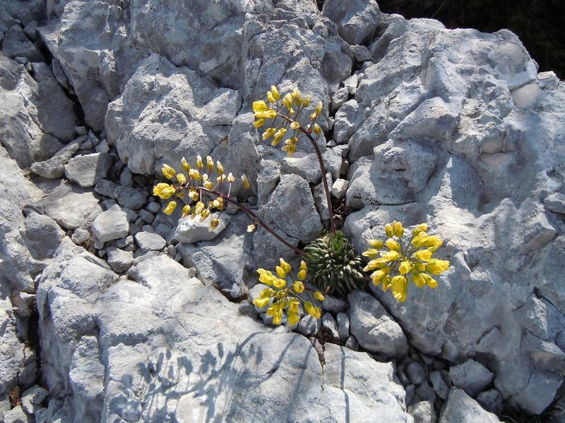 Kamen i cvet 43.%20Cvijet%20iz%20kamena